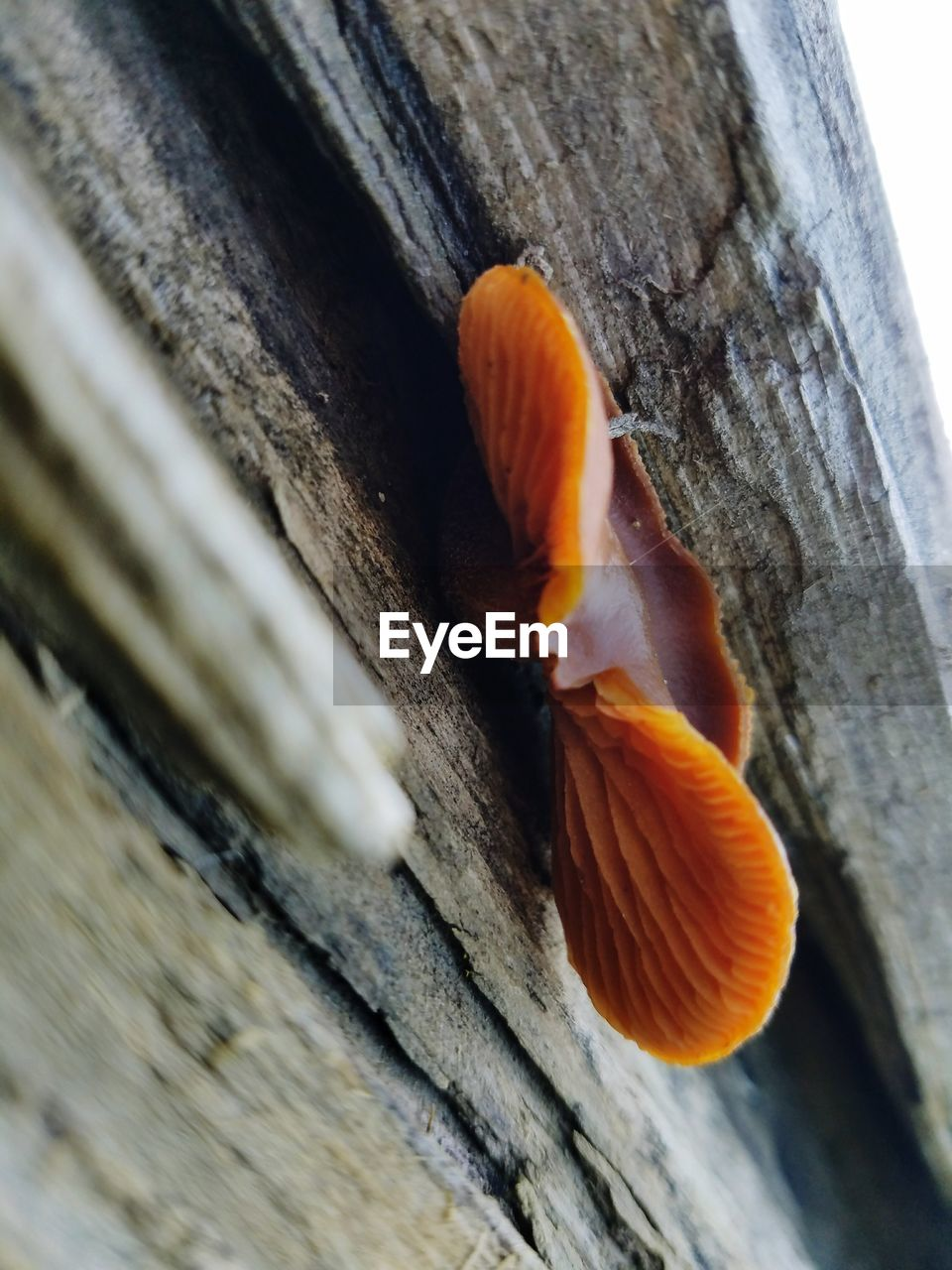orange color, no people, close-up, animals in the wild, day, wood - material, one animal, outdoors, nature, animal themes, beauty in nature, fragility, freshness