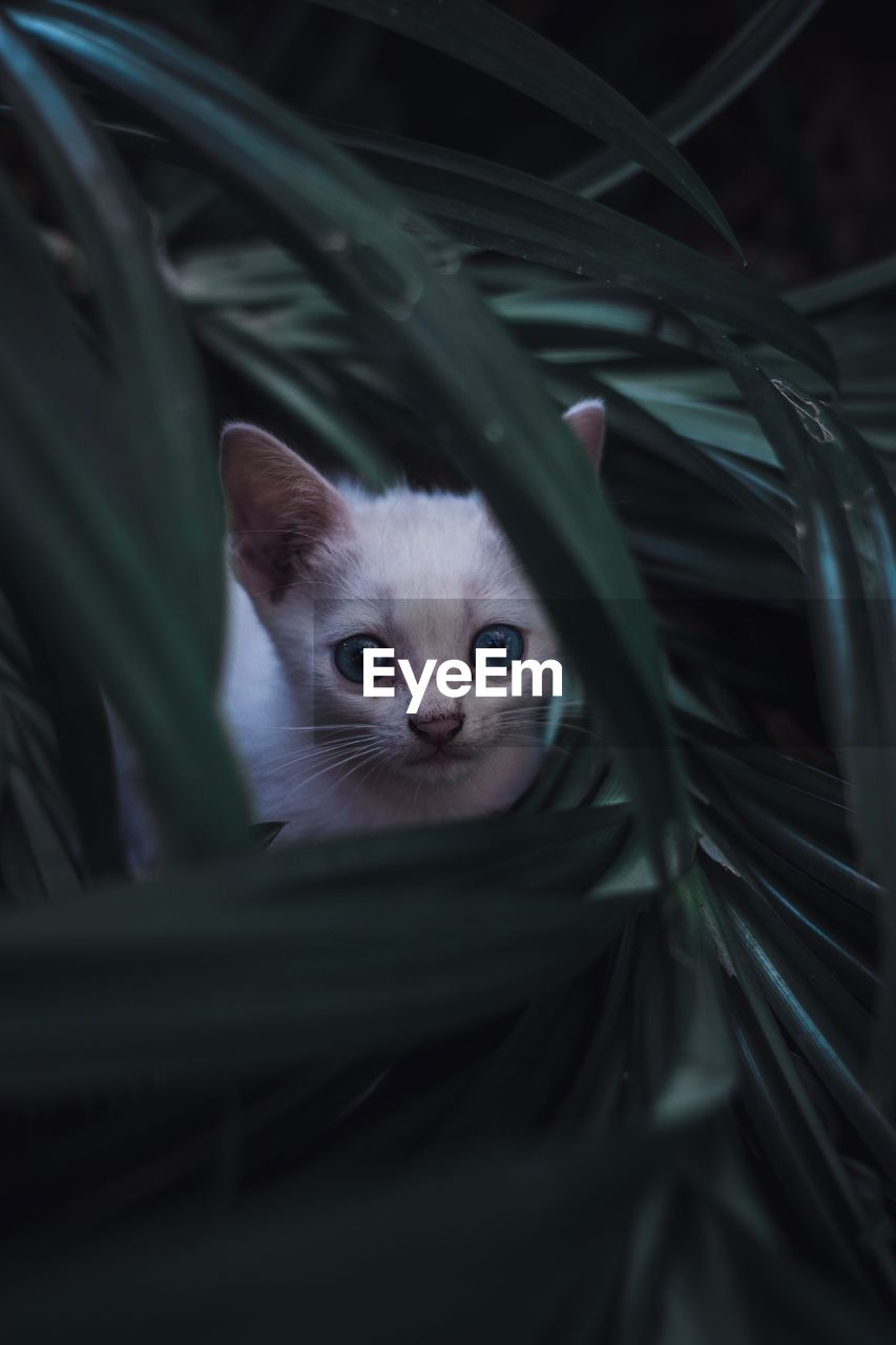 animal, one animal, animal themes, mammal, domestic, pets, domestic animals, feline, cat, looking at camera, domestic cat, vertebrate, portrait, animal body part, no people, animal head, plant, leaf, close-up, selective focus, kitten, whisker, animal eye