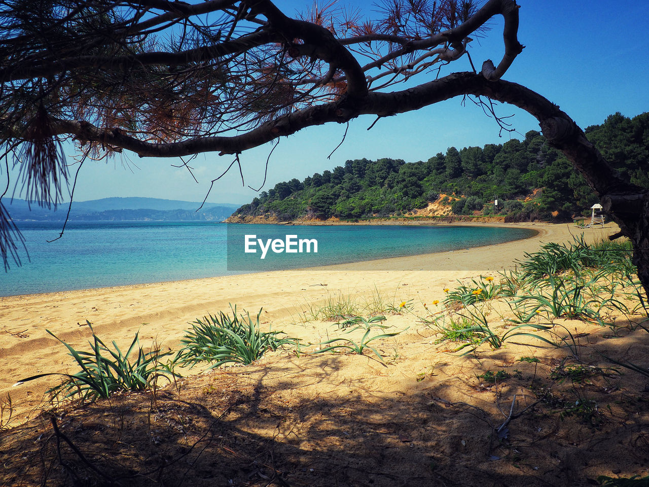 tree, plant, water, sky, tranquility, beauty in nature, sea, tranquil scene, nature, land, scenics - nature, beach, growth, no people, day, branch, outdoors, sand, clear sky