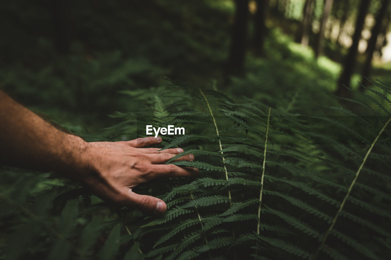 Cropped image of man gesturing by plants in forest
