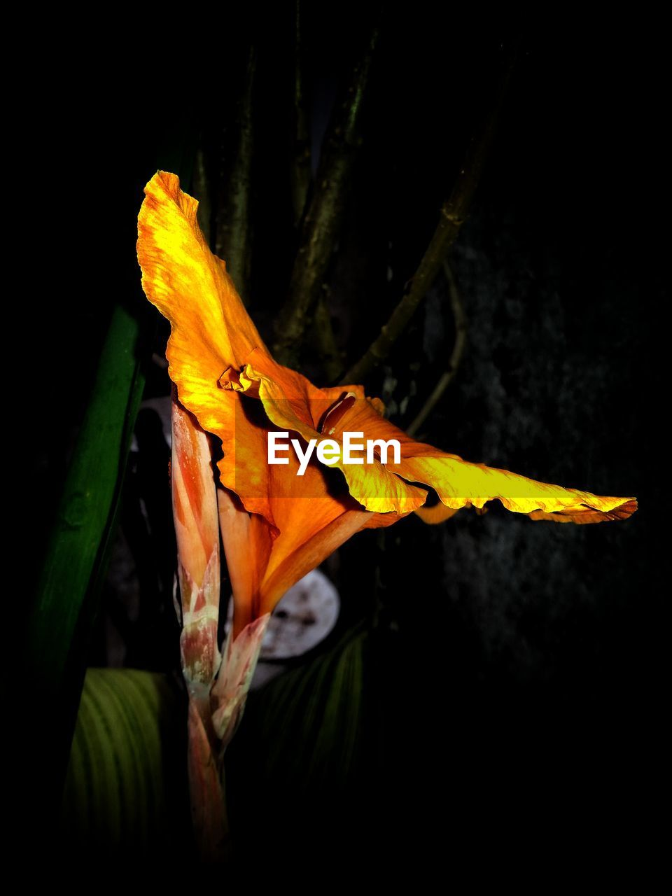 flower, petal, fragility, flower head, growth, beauty in nature, yellow, freshness, lily, nature, plant, no people, close-up, night, day lily, outdoors, springtime, blooming