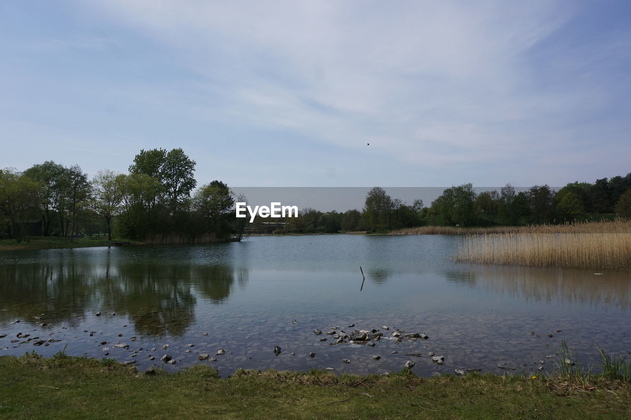 water, lake, tree, plant, tranquil scene, tranquility, scenics - nature, beauty in nature, sky, reflection, nature, bird, no people, vertebrate, cloud - sky, day, animal wildlife, animal, animal themes, outdoors