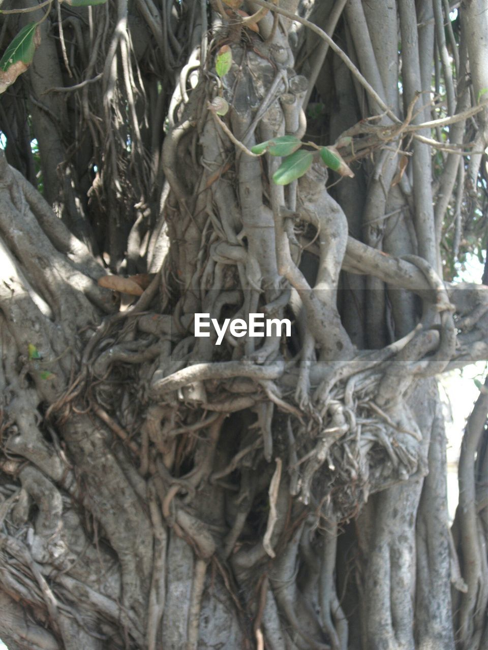 tree, tree trunk, root, day, no people, nature, outdoors, growth, branch, close-up