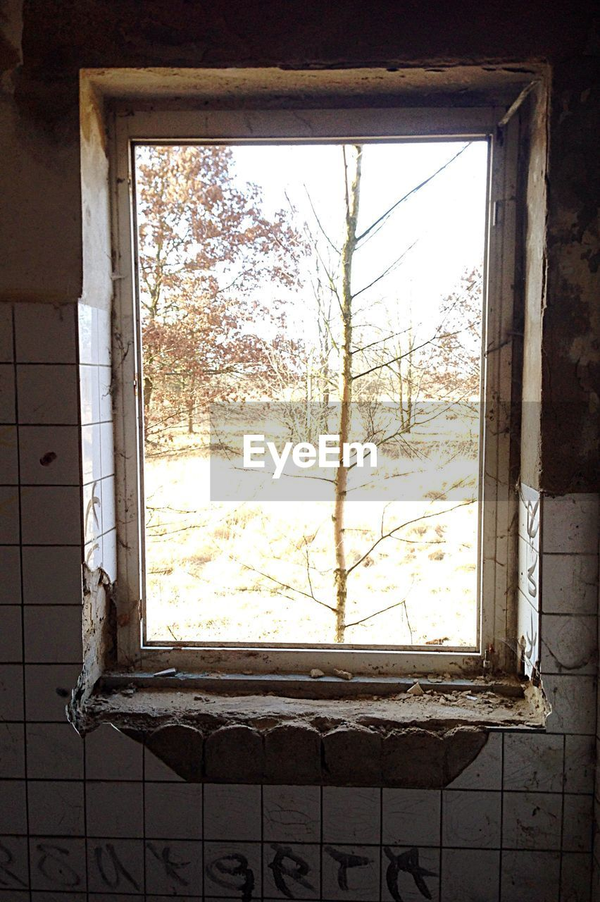 window, no people, indoors, day, window sill, home interior, architecture, close-up, tree