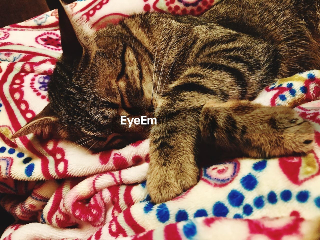 pets, cat, domestic cat, domestic, domestic animals, relaxation, feline, mammal, animal themes, animal, bed, one animal, furniture, vertebrate, resting, indoors, sleeping, close-up, lying down, whisker, no people, tabby