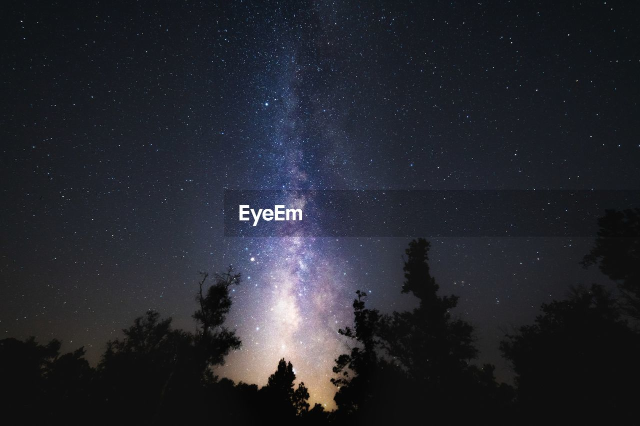 Low angle view of silhouette trees against star field milky way at night