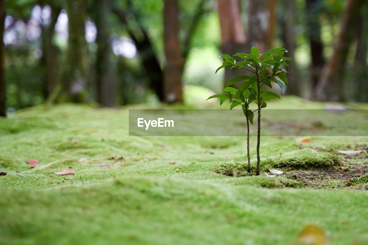 plant, growth, selective focus, green color, nature, beauty in nature, day, no people, land, close-up, tree, flower, vulnerability, field, tranquility, outdoors, grass, fragility, flowering plant, freshness, surface level