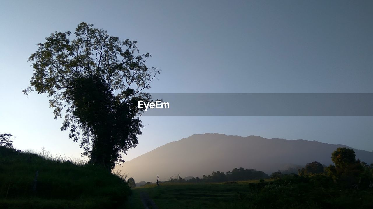 plant, sky, tree, beauty in nature, tranquility, tranquil scene, scenics - nature, mountain, nature, environment, landscape, no people, clear sky, growth, non-urban scene, outdoors, land, copy space, idyllic, silhouette