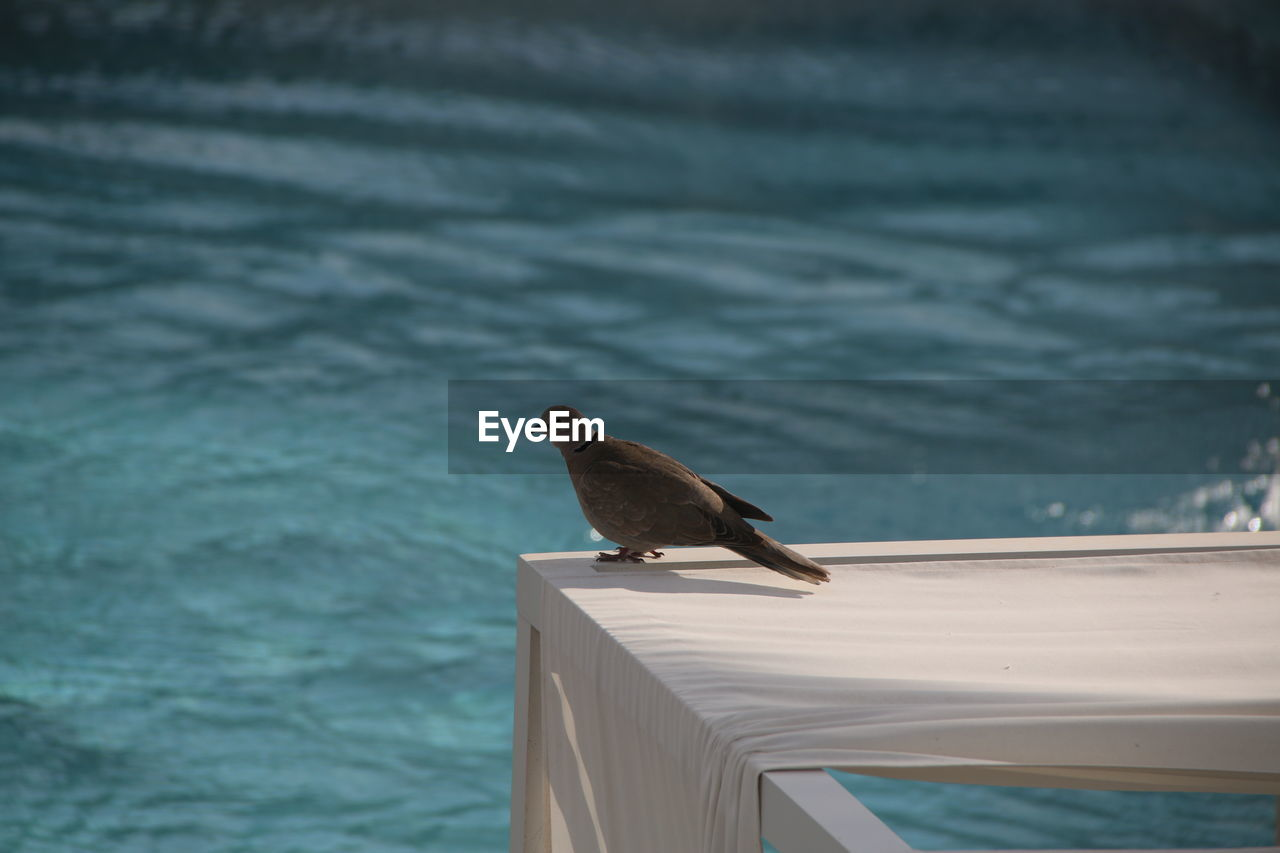 animal, animal themes, vertebrate, one animal, bird, animals in the wild, animal wildlife, water, perching, day, sea, no people, railing, nature, focus on foreground, outdoors, high angle view, wood - material, sparrow, marine, turquoise colored