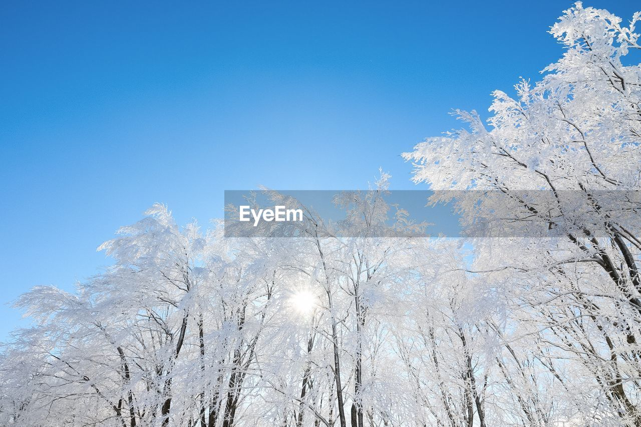 Low angle view of frozen trees against blue sky