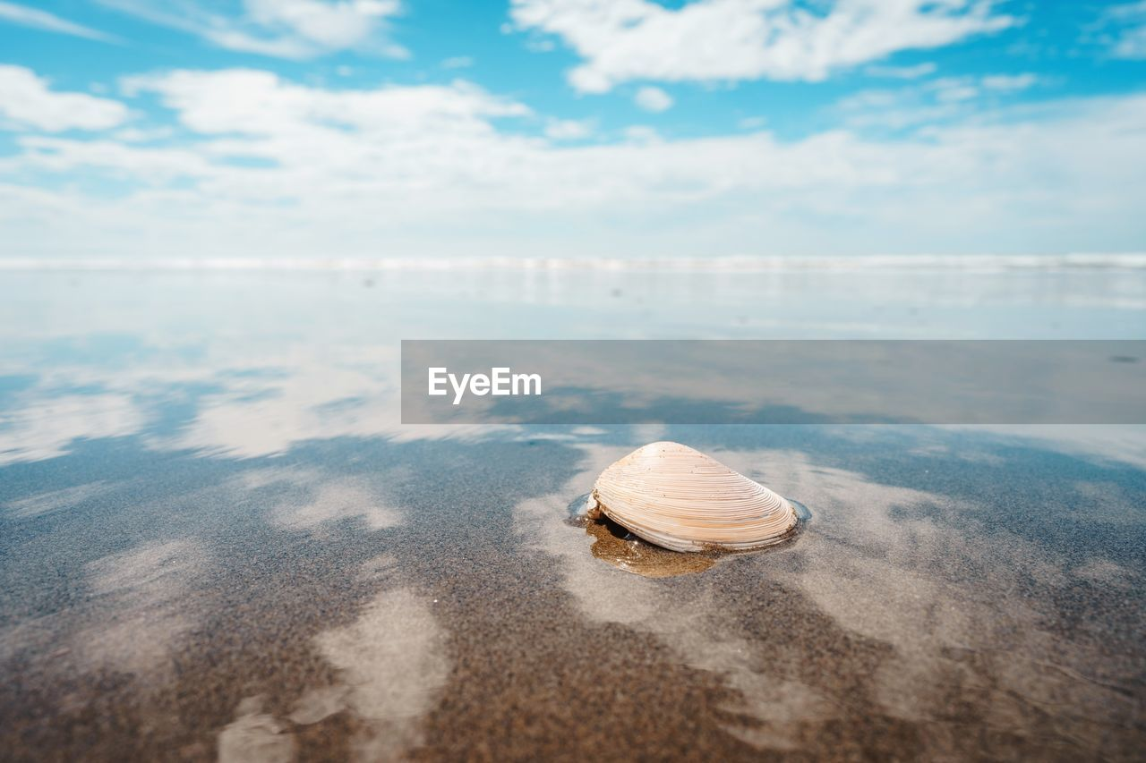 High angle view of seashell at beach against cloudy sky