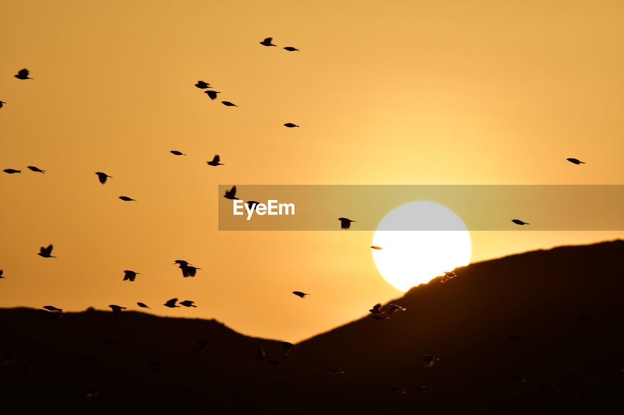 sunset, sky, silhouette, orange color, beauty in nature, scenics - nature, bird, group of animals, vertebrate, flying, animal themes, animal, animal wildlife, tranquility, sun, animals in the wild, large group of animals, tranquil scene, nature, no people, outdoors, flock of birds