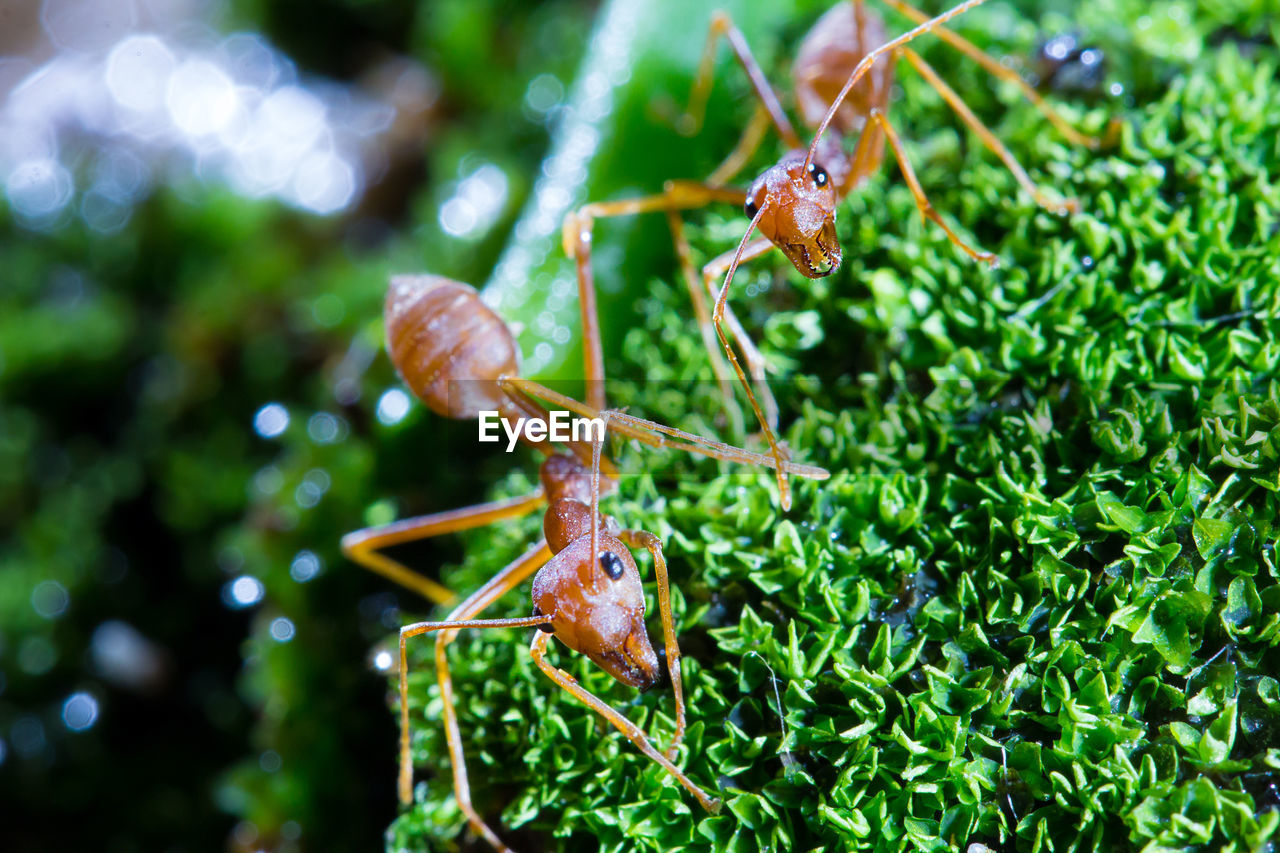 animal themes, animal, animal wildlife, insect, invertebrate, animals in the wild, one animal, close-up, plant, green color, no people, nature, focus on foreground, day, ant, plant part, leaf, animal body part, growth, outdoors