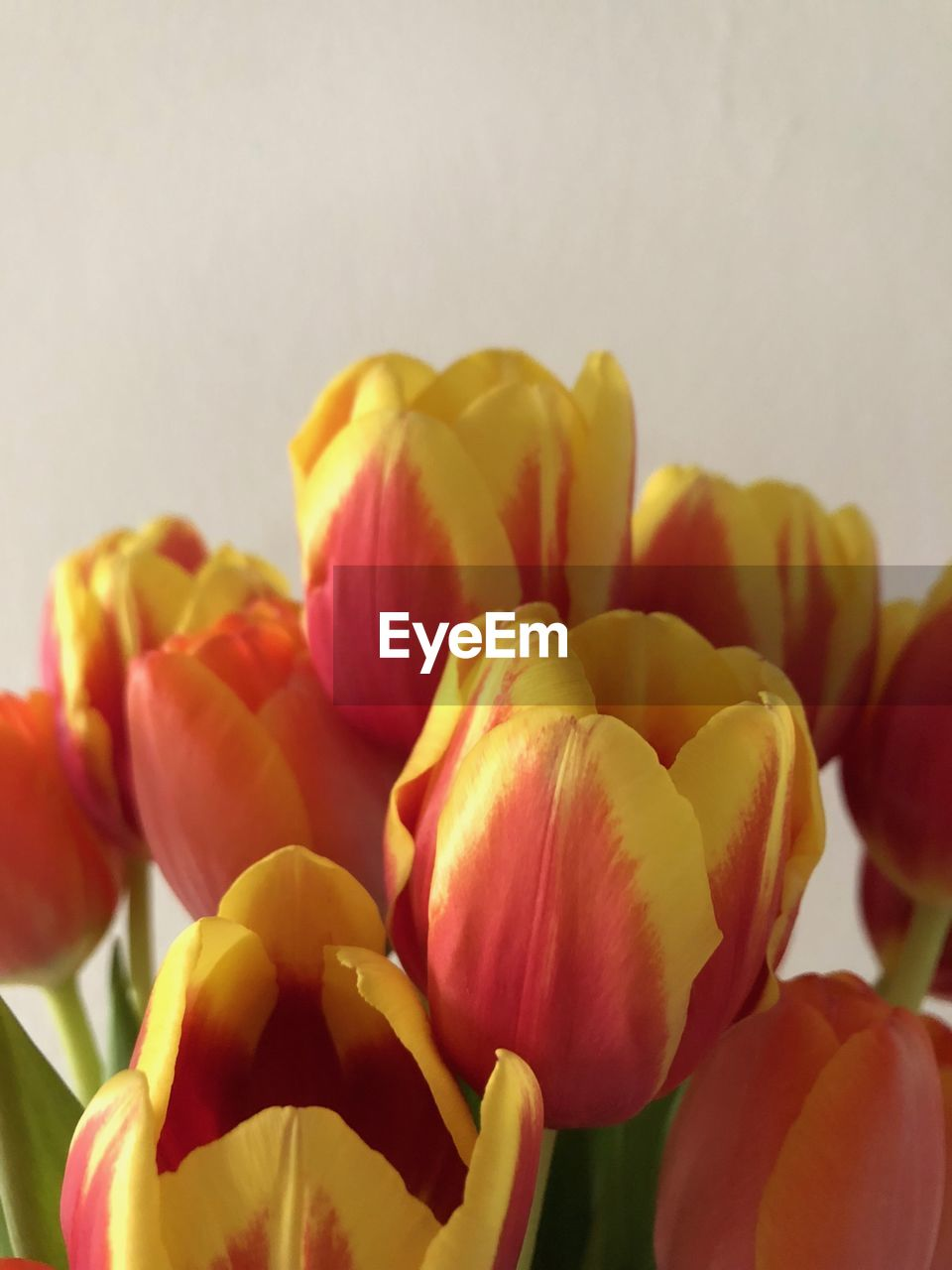 freshness, flower, flowering plant, beauty in nature, close-up, petal, fragility, vulnerability, plant, flower head, inflorescence, no people, nature, growth, tulip, rose - flower, rose, indoors, focus on foreground, yellow, softness, flower arrangement