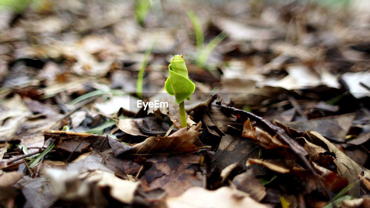 leaf, nature, no people, selective focus, day, close-up, outdoors, plant, green color, growth, beauty in nature, fragility