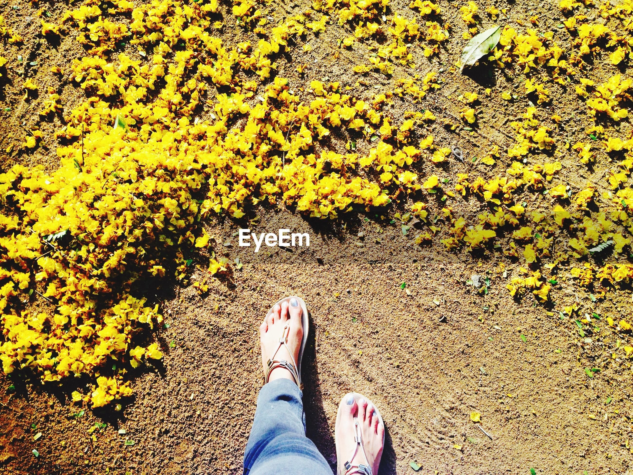 Low section of woman standing by yellow flower petals on field during sunny day