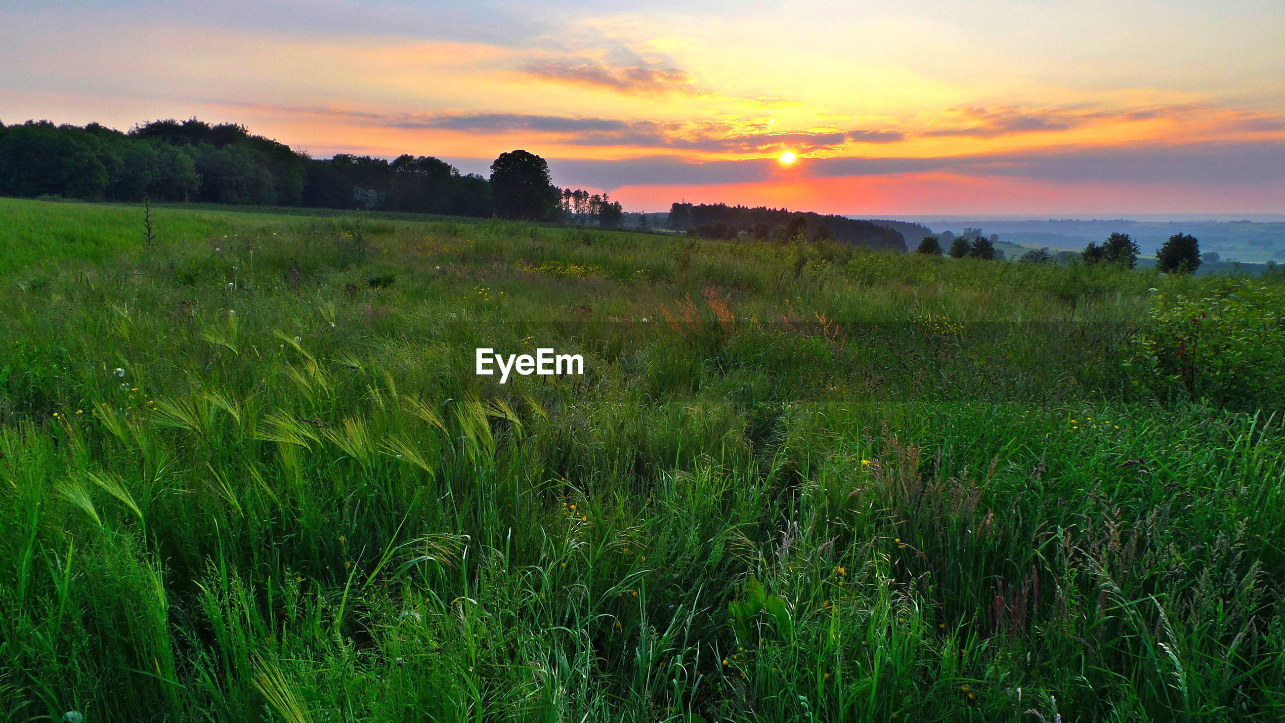 SCENIC VIEW OF LANDSCAPE DURING SUNSET