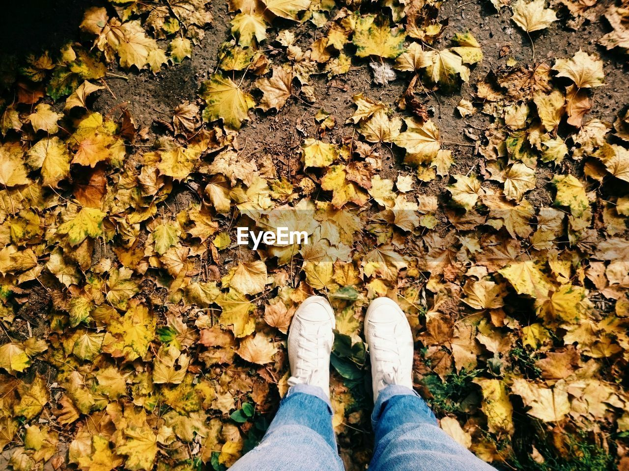 autumn, leaf, change, shoe, standing, human leg, low section, leaves, dry, real people, personal perspective, nature, fallen, one person, outdoors, day, high angle view, yellow, men, human body part, lifestyles, beauty in nature, leisure activity, canvas shoe, close-up, people