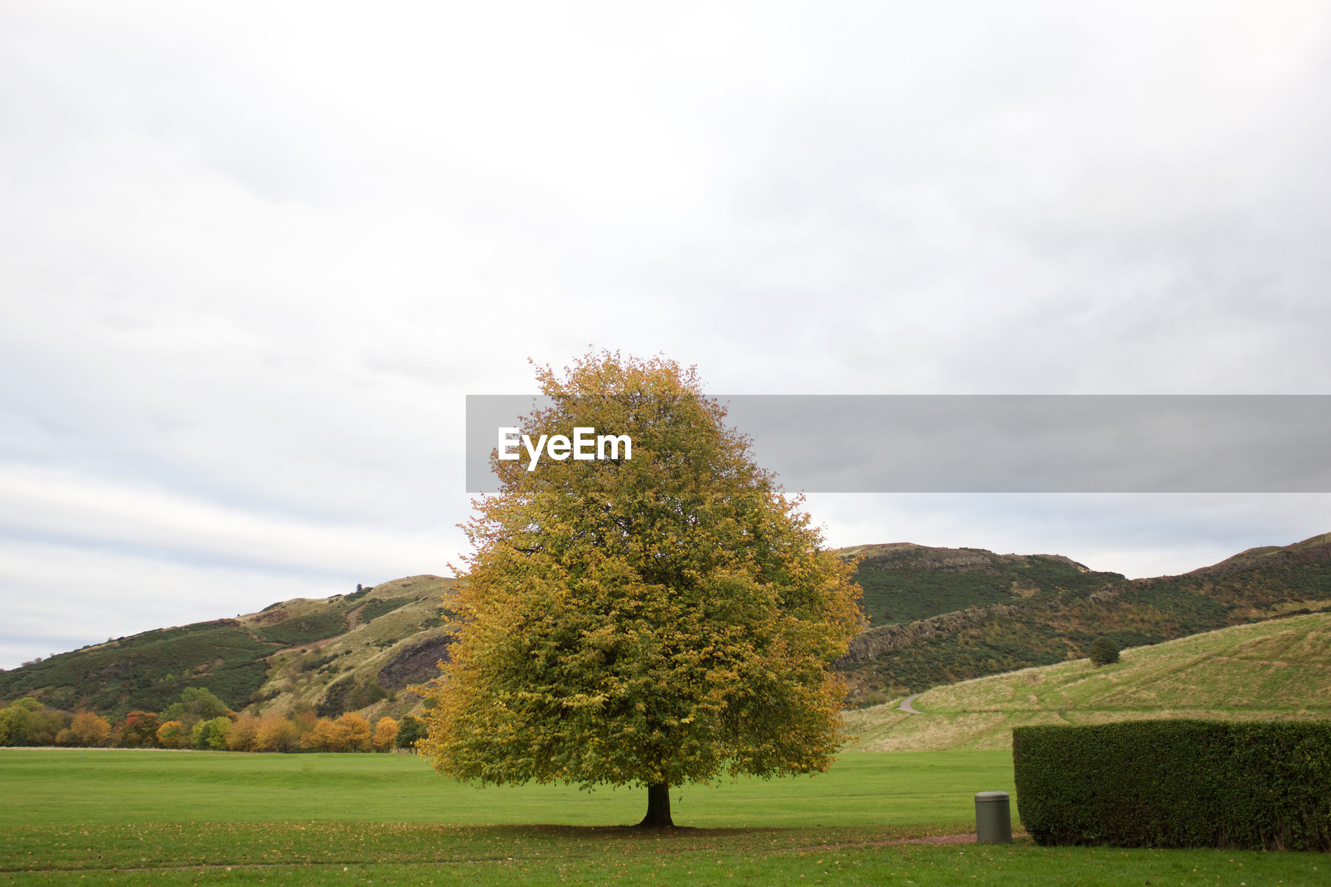 Tree growing on field by hill against sky