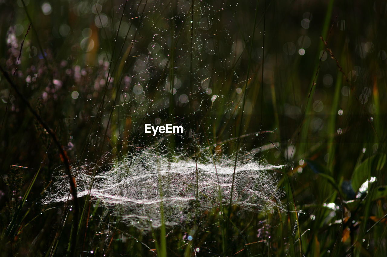 Close-up of water on spider web over grassy field