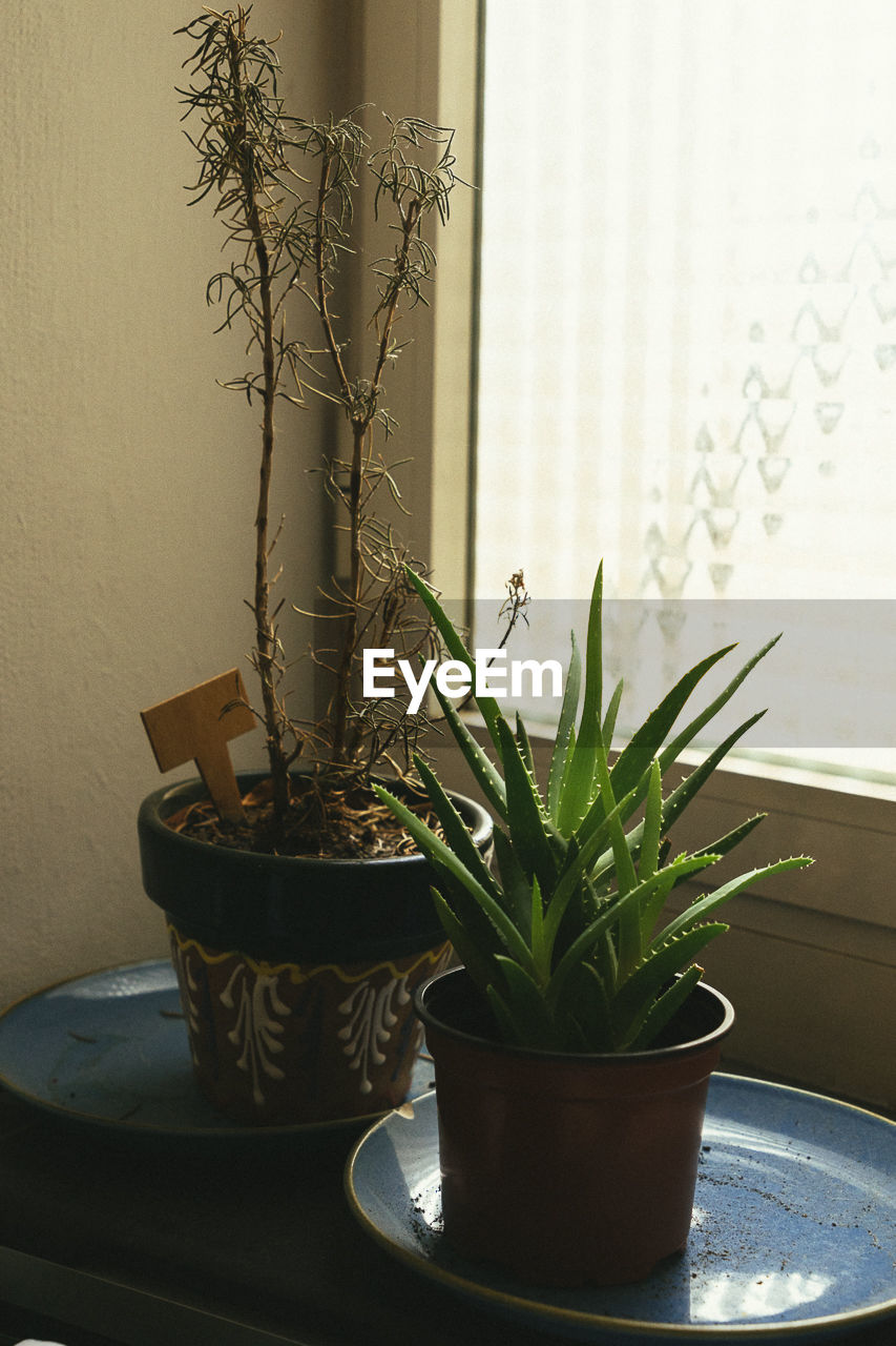 Potted plants by window at home