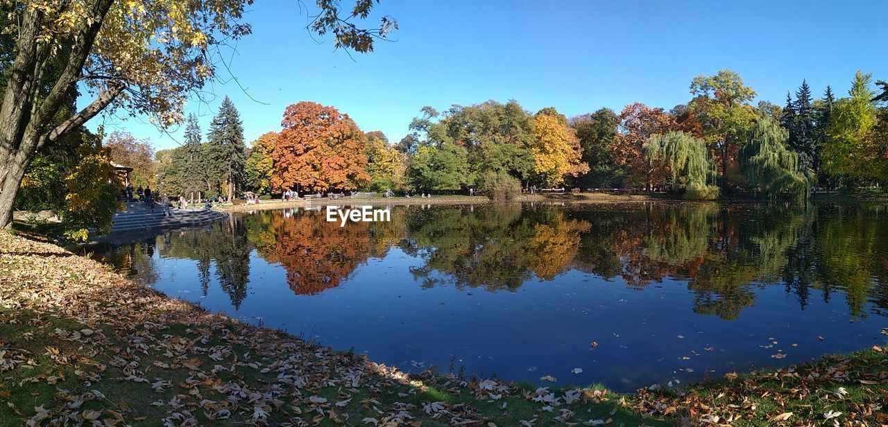 tree, reflection, plant, water, lake, sky, tranquility, nature, beauty in nature, autumn, tranquil scene, day, growth, scenics - nature, no people, change, waterfront, clear sky, outdoors