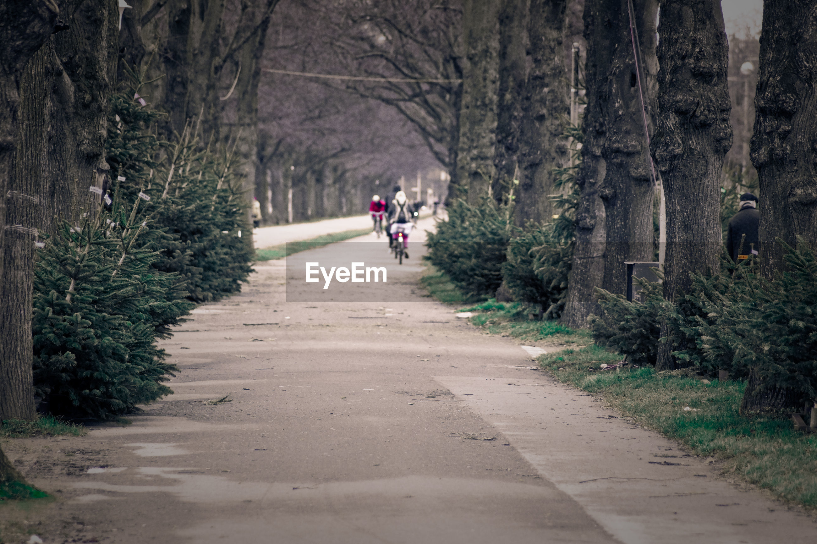 People cycling on road amidst trees in park
