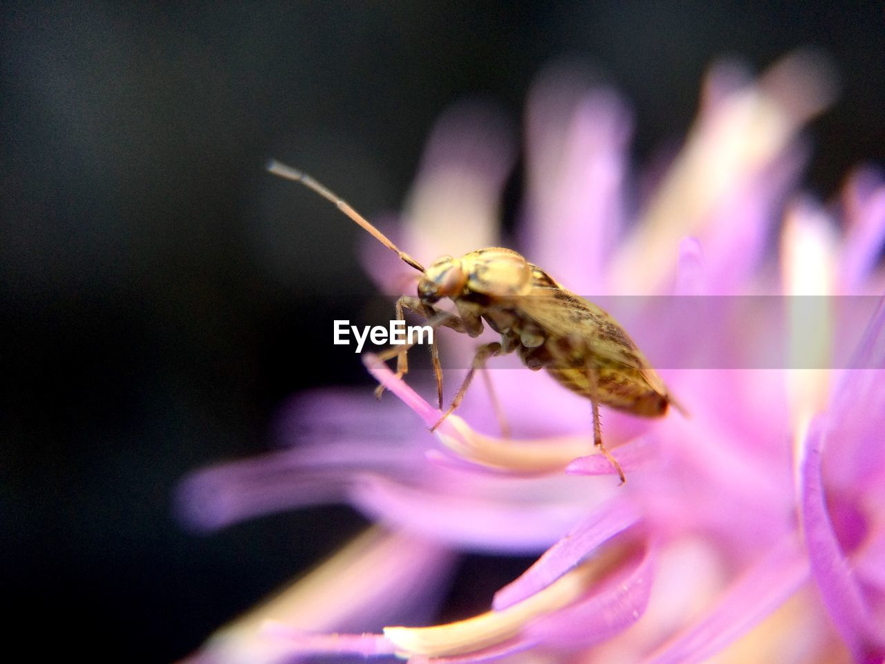invertebrate, insect, animal themes, animal, one animal, flowering plant, flower, animals in the wild, beauty in nature, animal wildlife, close-up, plant, petal, fragility, vulnerability, freshness, growth, selective focus, no people, flower head, purple, pollen, pollination