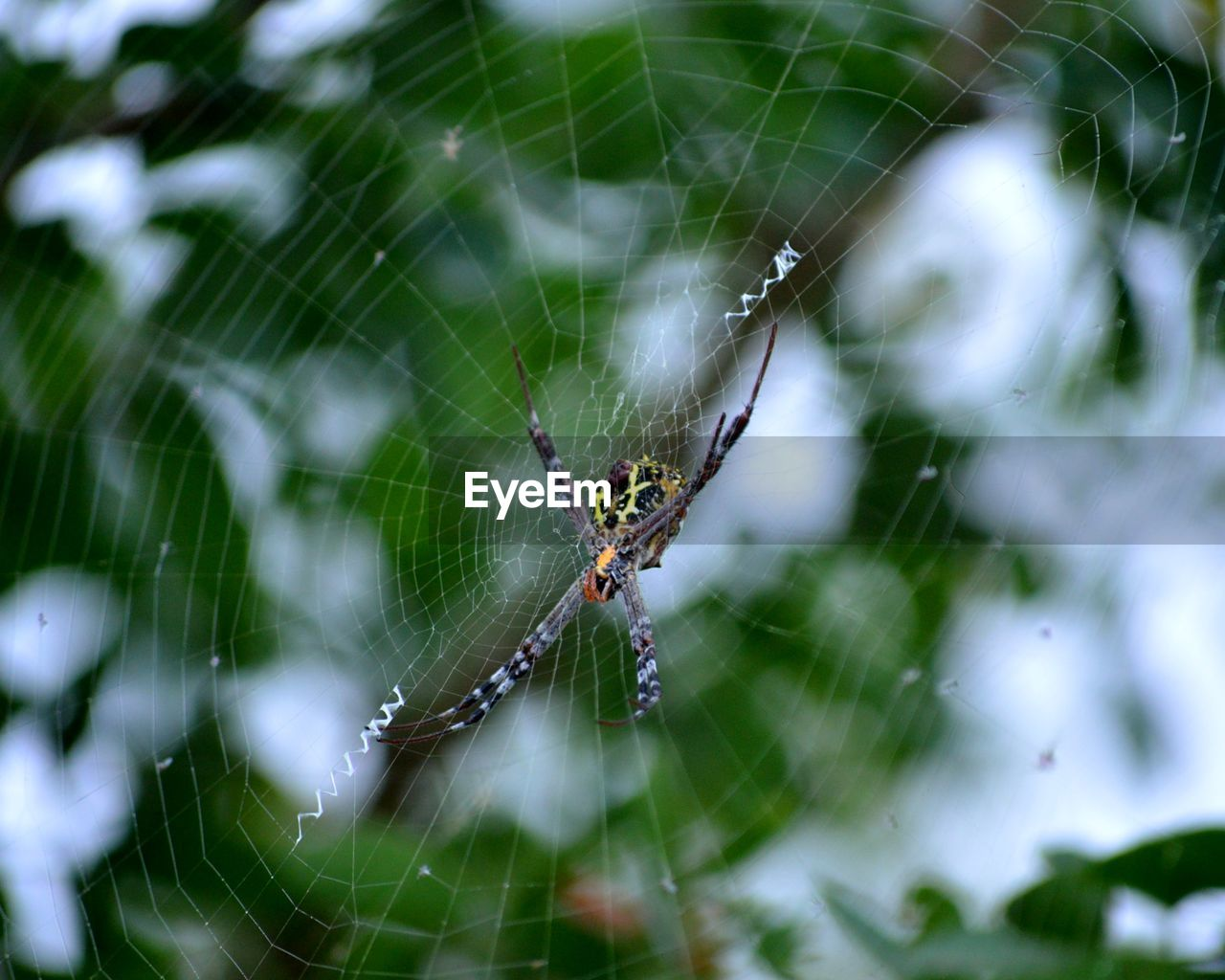 spider web, arachnid, invertebrate, animal themes, animal, animal wildlife, spider, animals in the wild, insect, fragility, arthropod, one animal, close-up, web, survival, focus on foreground, day, vulnerability, spinning, no people, animal leg, outdoors, complexity