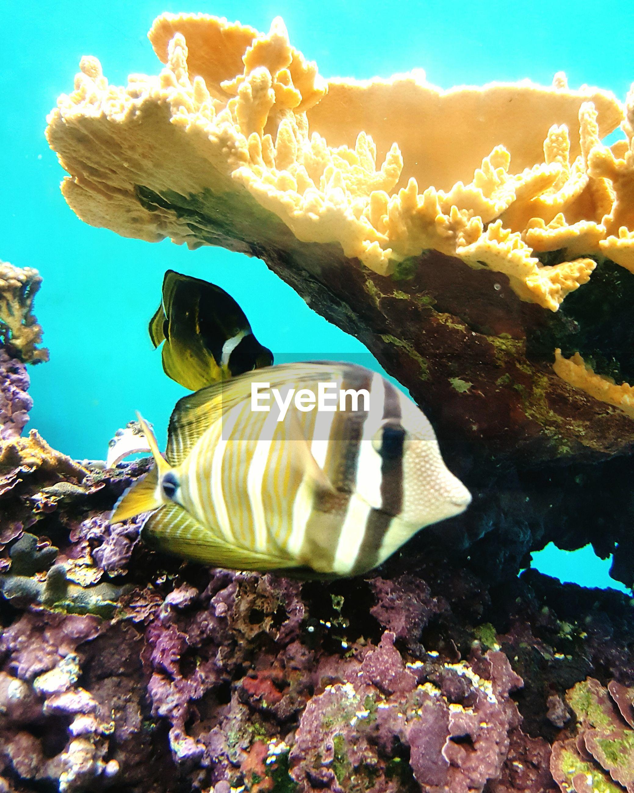 Close-up of fish swimming in waikiki aquarium