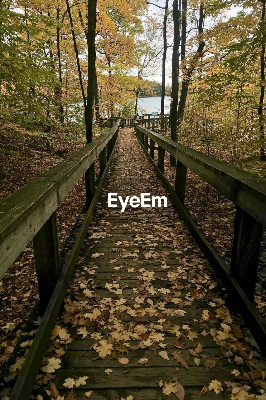tree, autumn, plant, direction, the way forward, change, nature, land, no people, growth, leaf, day, plant part, forest, diminishing perspective, beauty in nature, railing, footpath, tranquility, non-urban scene, outdoors, footbridge, woodland, leaves, fall