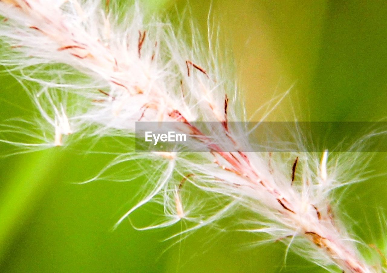 growth, nature, plant, close-up, beauty in nature, green color, no people, freshness, focus on foreground, day, cereal plant, fragility, outdoors, flower, flower head