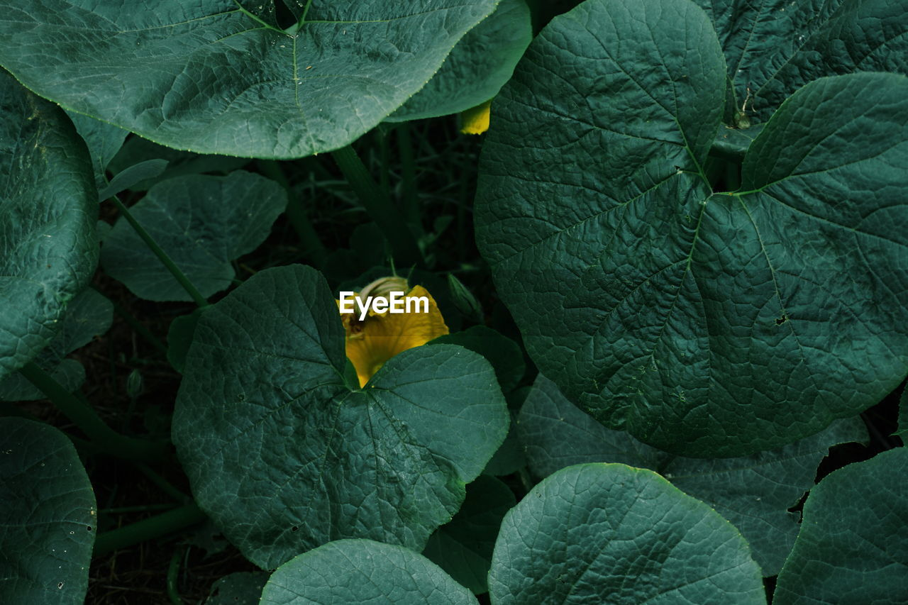 High Angle View Of Leaf Vegetables Growing Outdoors