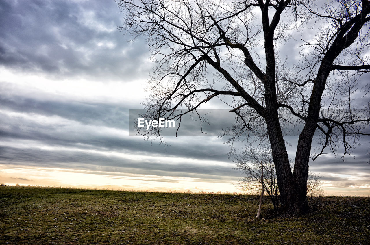 SCENIC VIEW OF BARE TREES ON FIELD AGAINST SKY