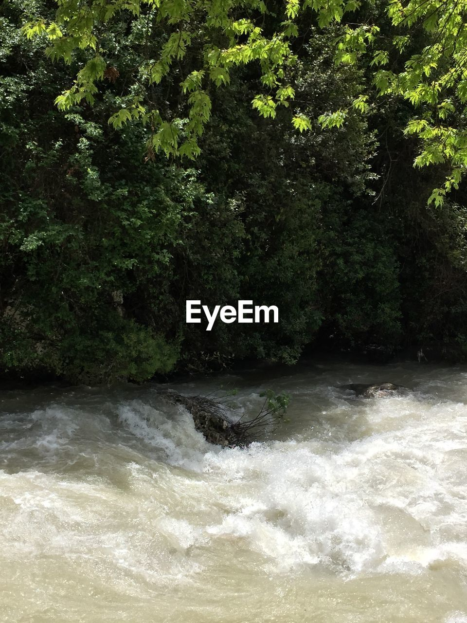 plant, water, tree, beauty in nature, waterfront, nature, motion, no people, growth, scenics - nature, day, forest, flowing water, land, green color, outdoors, river, flowing, power in nature