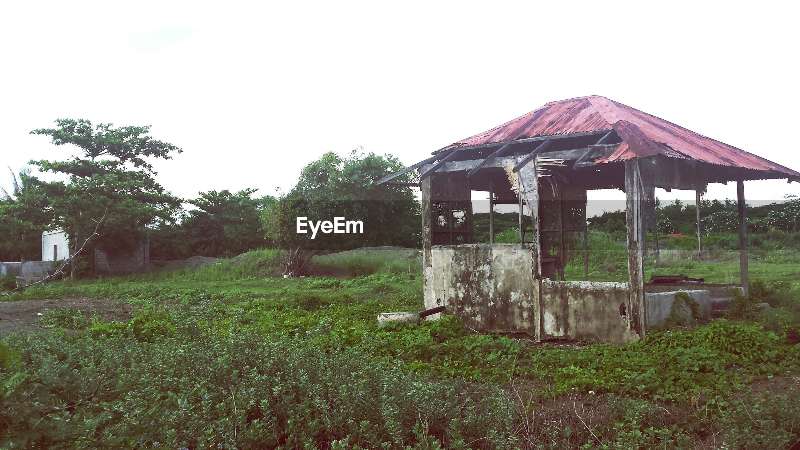 built structure, architecture, grass, building exterior, clear sky, tree, abandoned, house, field, old, obsolete, growth, sky, damaged, plant, day, old ruin, run-down, copy space, nature