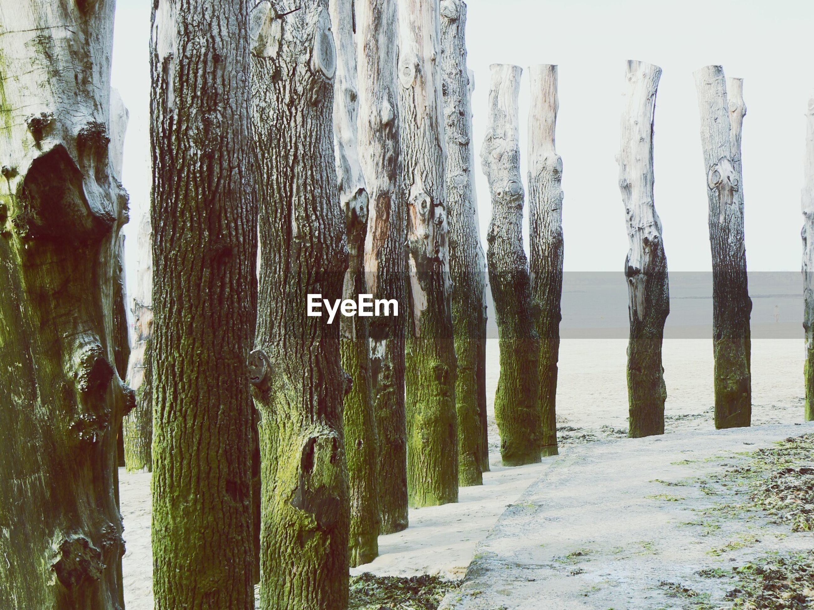 Row of wooden post on beach