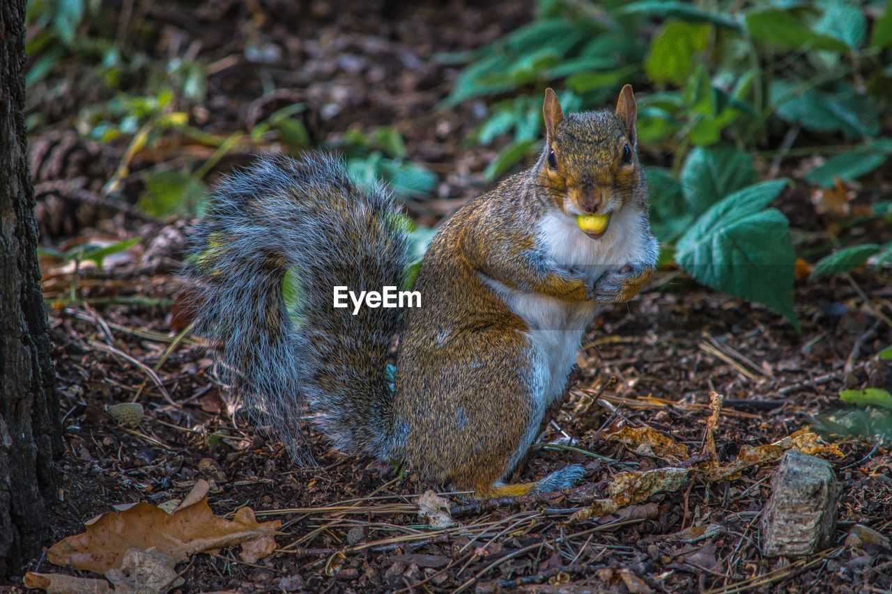 animal themes, animal, one animal, mammal, land, field, no people, animal wildlife, vertebrate, nature, animals in the wild, day, plant, focus on foreground, squirrel, outdoors, domestic, pets, domestic animals, sitting
