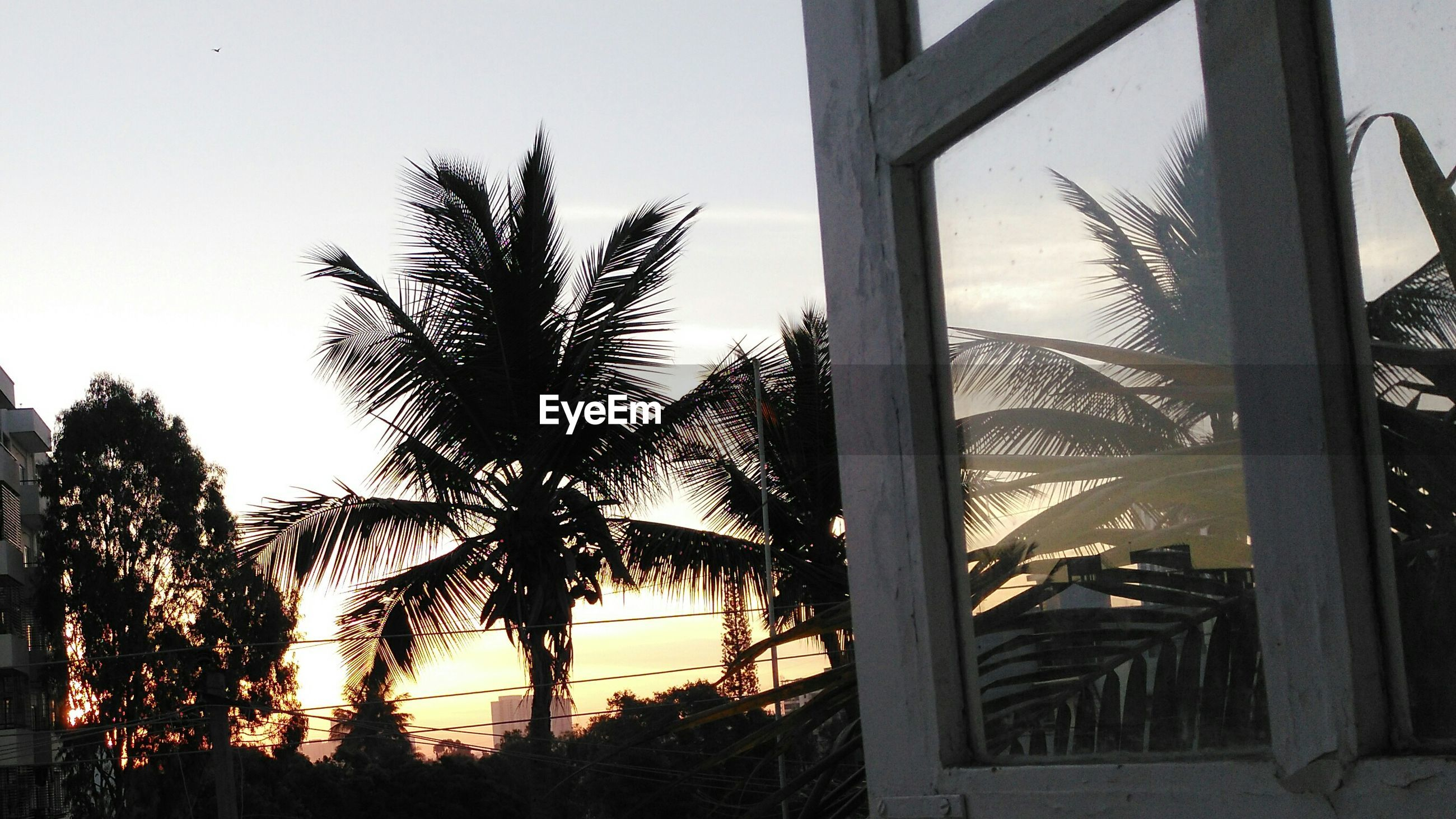 Silhouette trees during sunset seen from home
