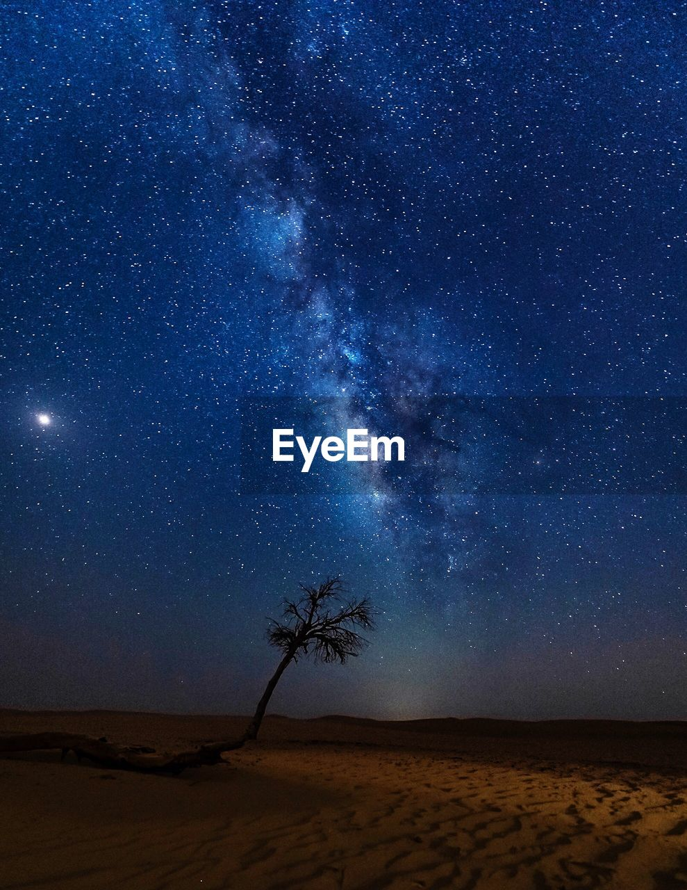 sky, scenics - nature, land, tranquil scene, tranquility, star - space, tree, beauty in nature, nature, plant, sand, night, galaxy, desert, space, no people, landscape, astronomy, environment, palm tree, arid climate, outdoors, milky way, climate