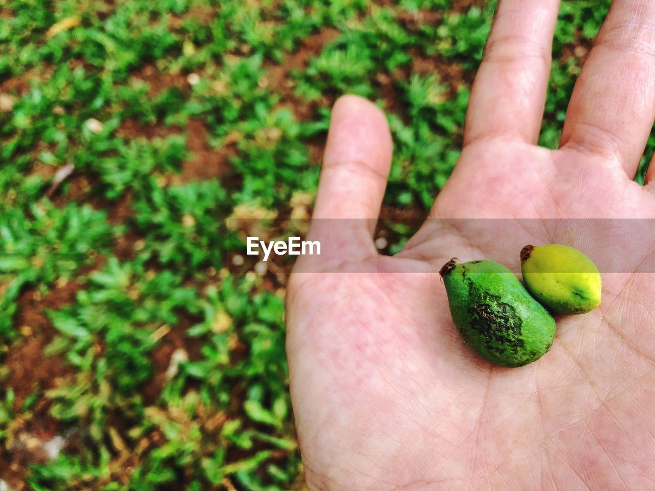 human hand, hand, human body part, green color, real people, one person, food and drink, holding, food, fruit, healthy eating, unrecognizable person, body part, day, wellbeing, freshness, lifestyles, finger, plant