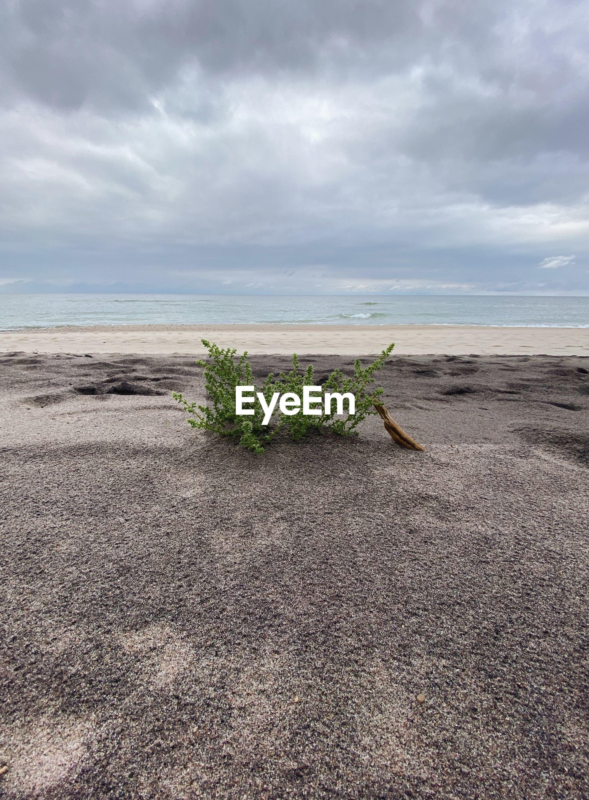 PLANTS ON BEACH AGAINST SKY