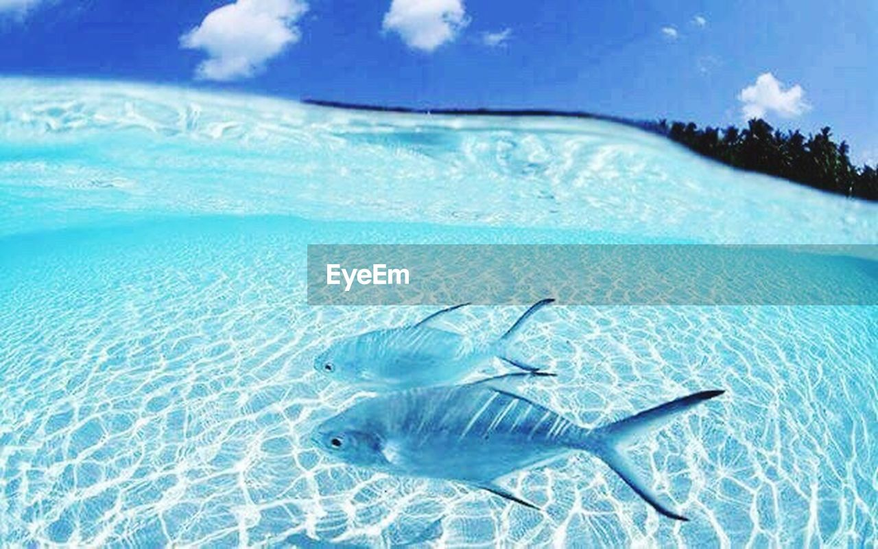 underwater, fish, sea life, undersea, sea, reflection, nature, tasting, water, refraction, scenics, sand, animals in the wild, no people, beauty in nature, day, sky, swimming, outdoors