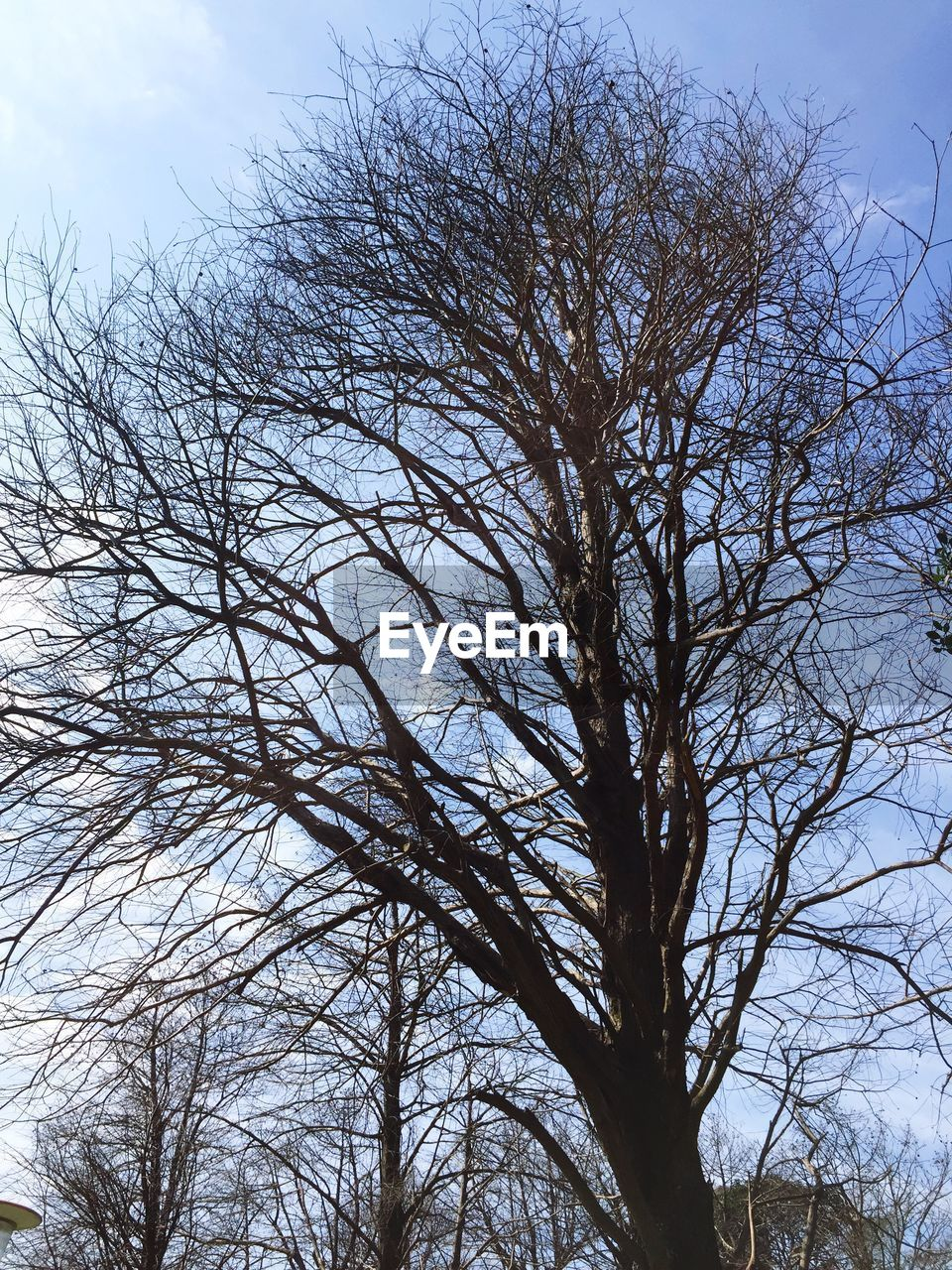 tree, bare tree, low angle view, branch, nature, no people, sky, tranquility, outdoors, beauty in nature, day, growth