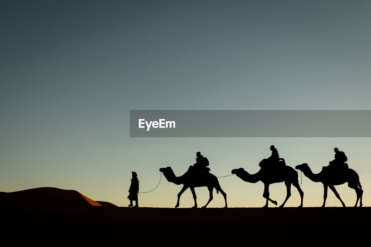 sky, silhouette, copy space, mammal, domestic animals, men, clear sky, camel, group of people, group of animals, real people, desert, sunset, land, nature, domestic, ride, working animal, riding, outdoors, arid climate