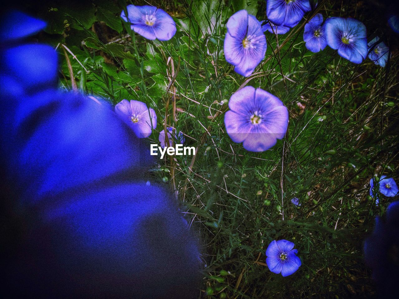 flower, growth, petal, fragility, nature, purple, grass, high angle view, real people, beauty in nature, freshness, flower head, blue, field, plant, one person, outdoors, low section, day, blooming, close-up, crocus, people