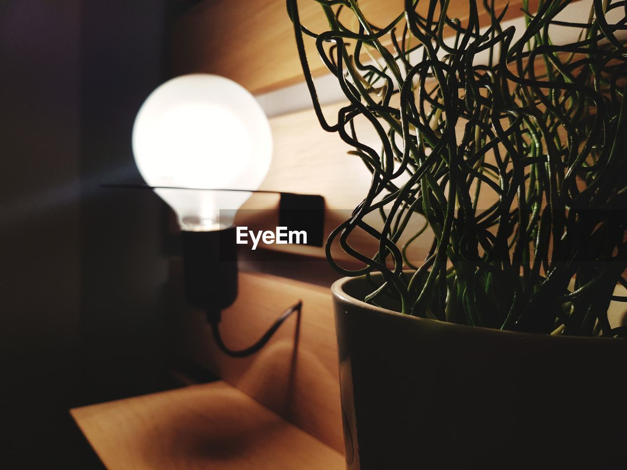 lighting equipment, electric lamp, illuminated, indoors, no people, close-up, table, home interior, electricity, technology, potted plant, plant, electric light, light, still life, glowing, domestic room, nature, decoration, modern, houseplant