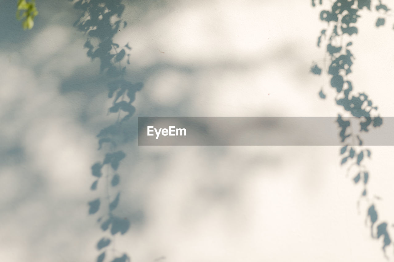 no people, day, nature, selective focus, close-up, indoors, plant, full frame, pattern, backgrounds, beauty in nature, tree, shadow, focus on foreground, design, white color, window, high angle view, snowflake