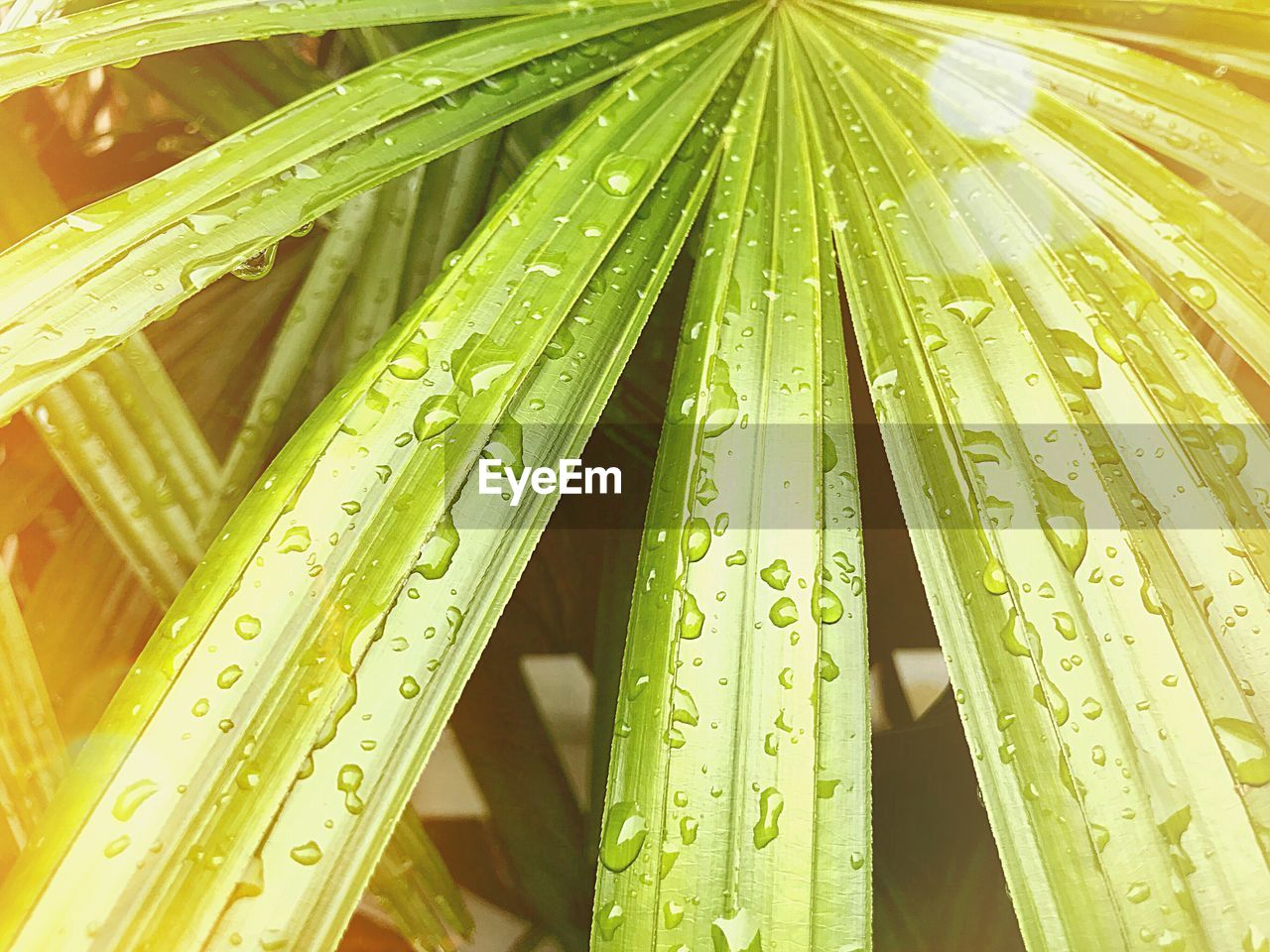 green color, growth, drop, water, plant, wet, nature, no people, close-up, beauty in nature, leaf, day, freshness, plant part, focus on foreground, grass, outdoors, blade of grass, rain, raindrop, dew, rainy season, leaves, purity, bamboo - plant
