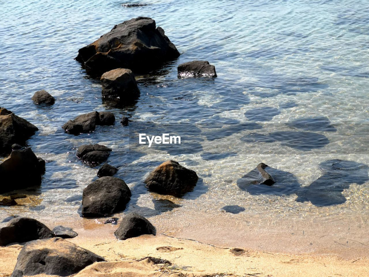 rock, water, rock - object, solid, high angle view, animal wildlife, group of animals, nature, no people, animals in the wild, day, beach, sea, vertebrate, animal, animal themes, land, bird, beauty in nature, outdoors, pebble